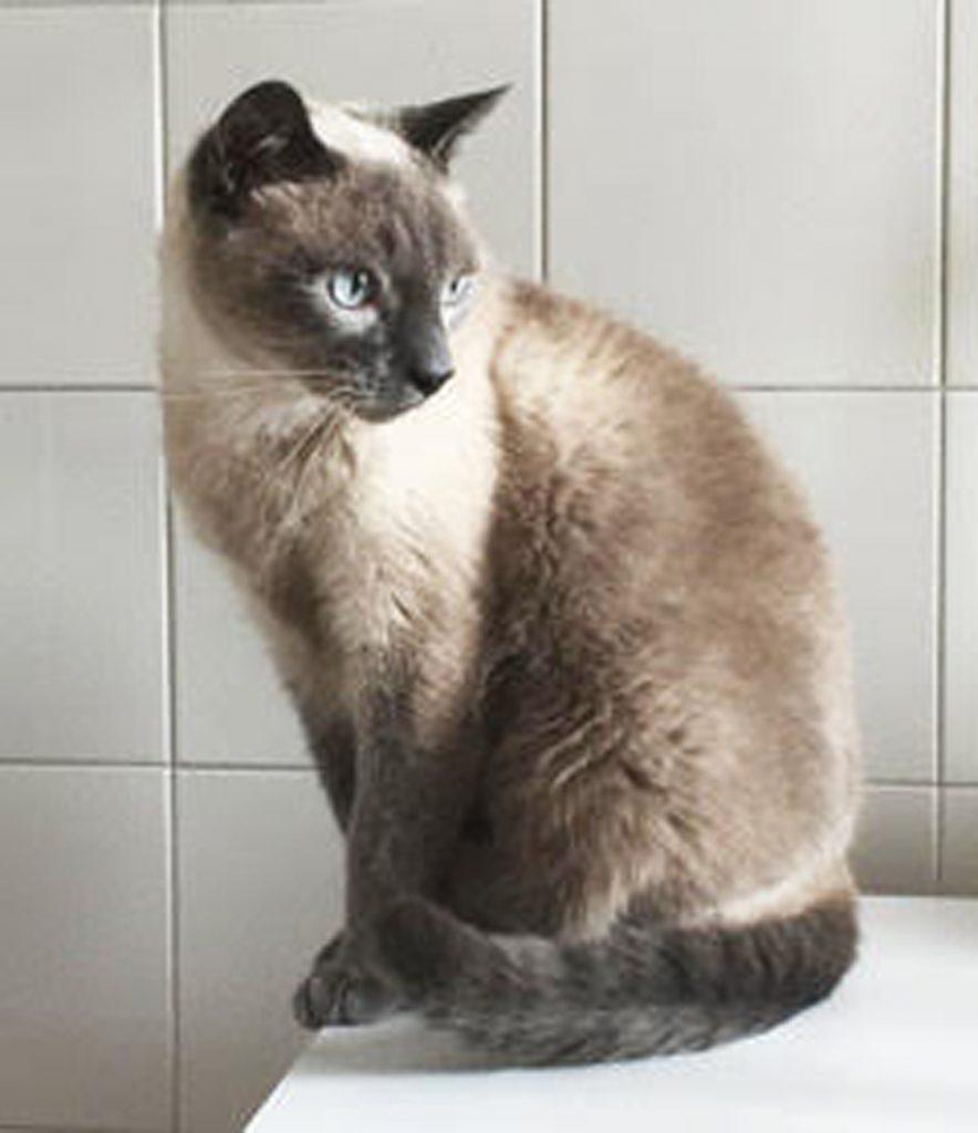 Il (vero)  gatto Momo